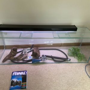 Buy Tropical Fish Aquarium