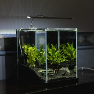 Artificial Aquarium