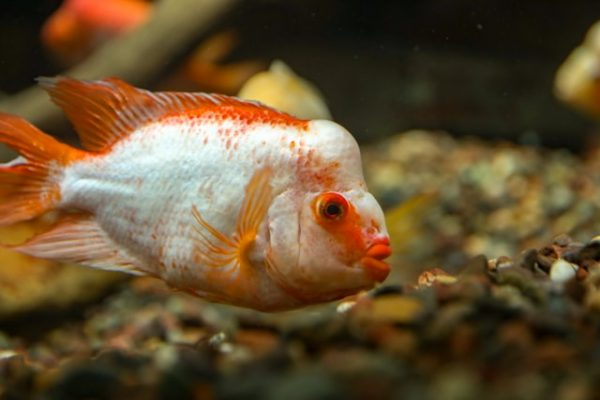 exotic fish for sale