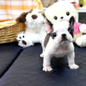 Online puppies for sale